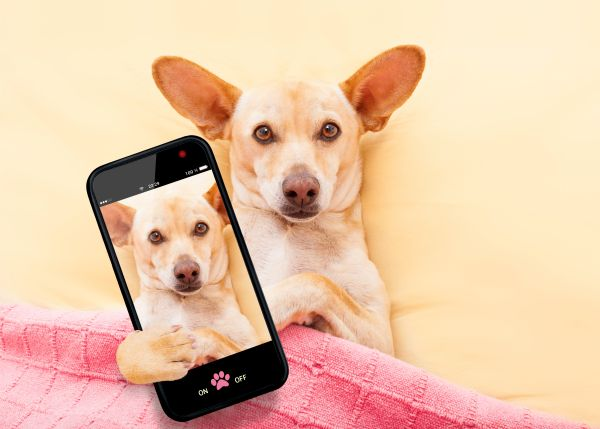 dog with mobile phone ready for video consultation and telemedicine